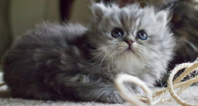 Kitten Looking Up, August 2012 by Belal Khan