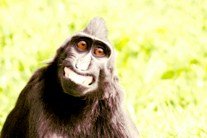 Smiling ape by Tim Simpson v3